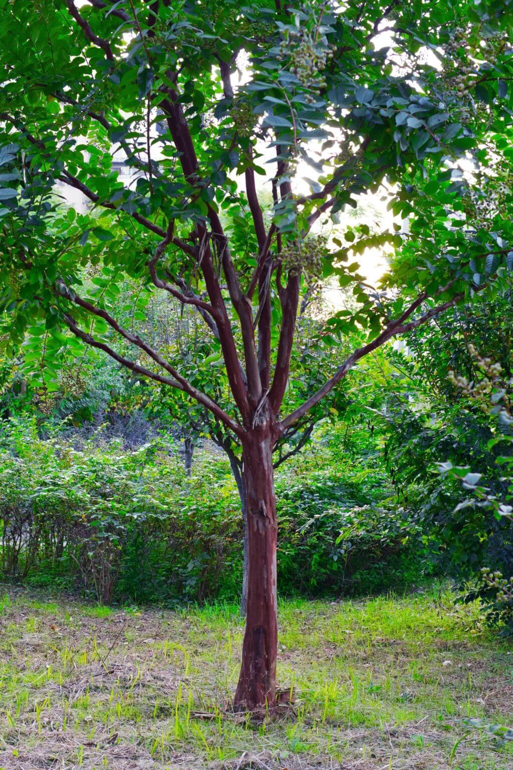 樹木設定74