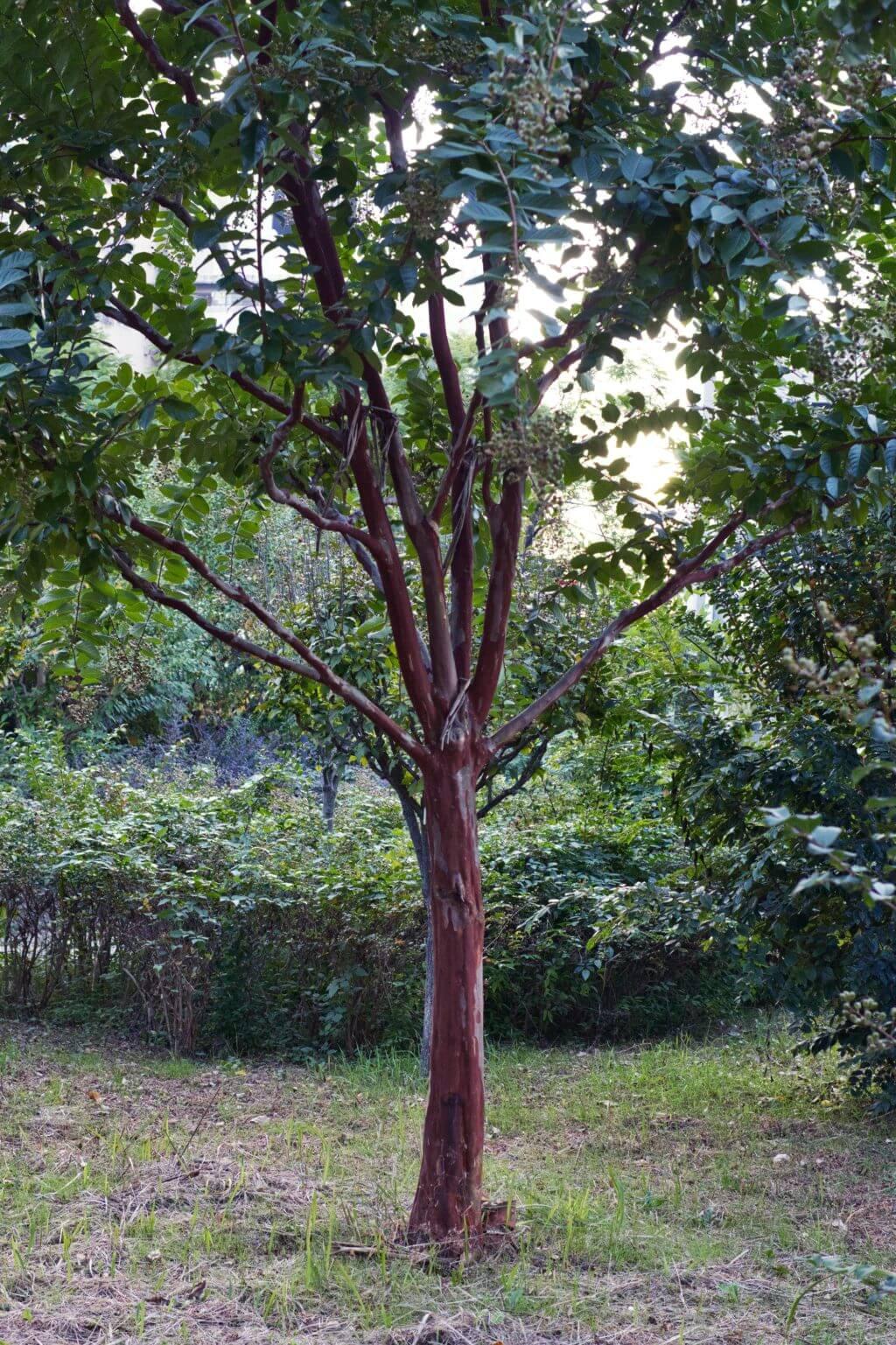 樹木設定0